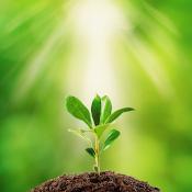 Green plant bud